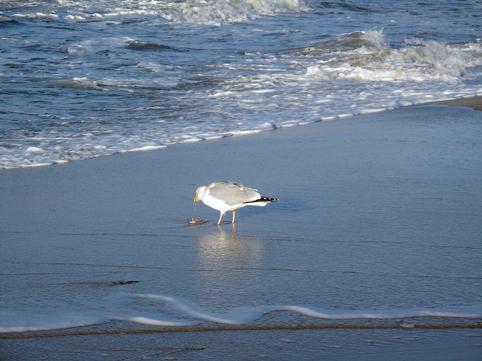 Seesternschmaus